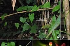 Phát hiện 3 loài thực vật và 3 loài côn trùng mới tại Việt Nam