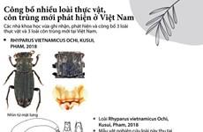 [Infographics] Công bố nhiều loài côn trùng và thực vật mới ở Việt Nam