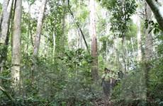 [Mega Story] Đóng cửa rừng tự nhiên: Cần giải pháp quyết liệt