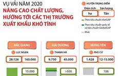 [Infographics] Quả vải Việt hướng tới thị trường xuất khẩu khó tính
