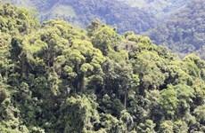 """Chi trả dịch vụ môi trường rừng ở Điện Biên: Hiệu quả """"3 trong 1"""""""