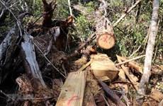 Gia Lai: Khởi tố 8 bị can liên quan vụ phá rừng tại huyện Kbang