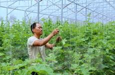 """""""Dân vận khéo"""" ở Hải Phòng: Thay đổi bộ mặt nông thôn, nông nghiệp"""