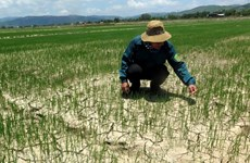 Gần 55.000ha cây trồng ở khu vực Trung Bộ bị hạn hán, thiếu nước