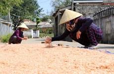 Ngư dân Bạc Liêu có thu nhập khá nhờ trúng mùa ruốc biển