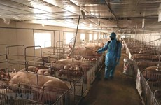 Khánh Hòa: Thêm 2,2 tỷ đồng phòng chống dịch tả lợn châu Phi