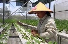 """Khát vọng """"Rồng bay"""": Đưa nông thôn Hà Nội trở thành nơi đáng sống"""