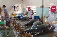 Hiệp định EVFTA: Cơ hội lớn cho ngành chế biến cá ngừ tỉnh Khánh Hòa