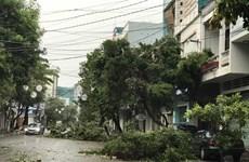 Đắk Lắk: Gió bão giật bay tấm tôn làm 1 người tử vong tại chỗ