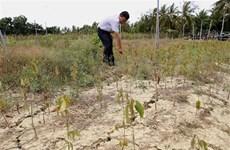 Giải pháp phát triển bền vững ĐBSCL trong bối cảnh biến đổi khí hậu