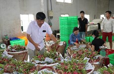 Nông sản, thực phẩm Việt rộng cửa vào Singapore và Malaysia