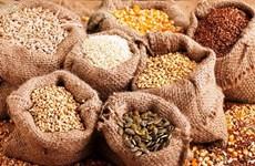 Xuất cấp khẩn cấp gần 39 tấn hạt giống cây trồng để khôi phục sản xuất
