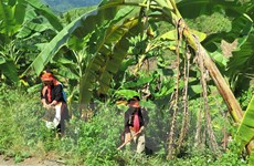 Hiệu quả từ những nỗ lực giảm nghèo ở vùng cao biên giới Lai Châu