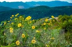 Gia Lai: Khai mạc Tuần lễ hoa dã quỳ - núi lửa Chư Đăng Ya