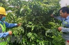 Tìm hướng đi mới đưa ngành càphê Đắk Lắk vượt qua khó khăn