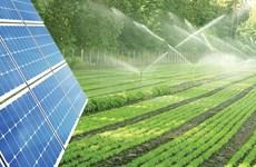 Nông-điện kết hợp giúp phát triển năng lượng tái tạo bền vững ở ĐBSCL