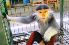 Ngôi nhà an toàn và tin cậy của các loài linh trưởng ở Ninh Bình