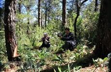 Khẩn trương điều tra vụ 'bức tử' cây rừng, chiếm 4ha đất lâm nghiệp