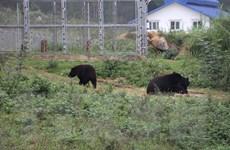 Cơ sở bảo tồn gấu Ninh Bình: Nơi những cá thể gấu được về với tự nhiên