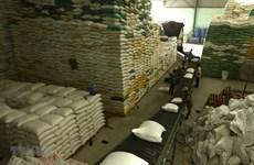 Đấu thầu mua gạo dự trữ quốc gia: Đảm bảo công bằng chấm điểm nhà thầu