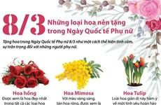 [Infographics] Những loại hoa nên tặng trong Ngày quốc tế Phụ nữ 8/3