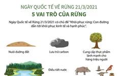 [Infographics] Ngày Quốc tế về Rừng: 5 vai trò của rừng