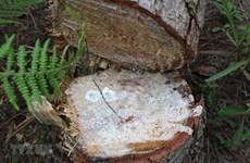 Kỷ luật tổ chức, cá nhân để xảy ra phá rừng tại Vườn Quốc gia Xuân Sơn