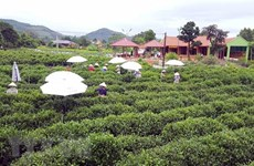 Qua miền di sản Việt Bắc - Cơ hội quảng bá cho du lịch Thái Nguyên