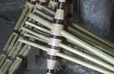 Nỗ lực bảo tồn cây khèn Mông trên cao nguyên đá Hà Giang