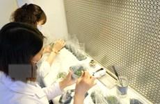 Giải mã công nghệ nhân giống hàng loạt lan Giả hạc Di Linh ở Lâm Đồng