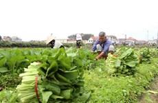 Hà Nội cung ứng đủ lương thực, thực phẩm tại các khu vực cách ly