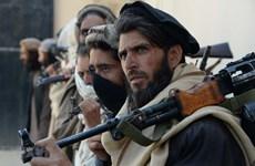 Chính phủ Afghanistan và Taliban thúc đẩy đàm phán hòa bình