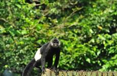 Chung tay bảo vệ loài hoang dã ở VN: Tuyên truyền trong tình hình mới