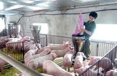 Kiên Giang chú trọng nhân rộng các mô hình chăn nuôi an toàn