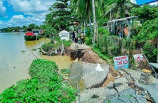 Phát triển thích ứng biến đổi khí hậu: Cà Mau với bài toán giữ đất