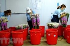 Cục Bảo vệ thực vật thông tin về việc cấm sử dụng hoạt chất Glyphosate