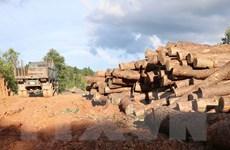 Điện Biên: Tạm đình chỉ Hạt trưởng Hạt kiểm lâm huyện Tuần Giáo