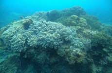 Rạn san hô trên vịnh Hạ Long đang có dấu hiệu khôi phục tốt