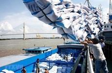 Xuất khẩu gạo kỳ vọng những tín hiệu tốt khi dịch được kiểm soát