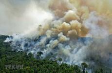 """Nguy cơ """"cạn kiệt sự sống"""" của Trái Đất do biến đổi khí hậu"""