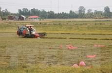 Bộ trưởng Lê Minh Hoan: Doanh nghiệp cần đồng hành tiêu thụ lúa Hè Thu