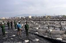 UNDP: Chất độc da cam, hậu quả chiến tranh ảnh hưởng đến nhiều thế hệ