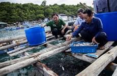Kiên Giang phát triển nghề nuôi biển theo hướng an toàn