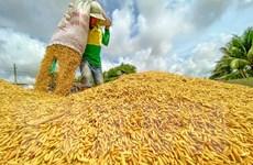 Nguyên nhân khiến giá gạo giảm xuống mức thấp nhất trong 1,5 năm