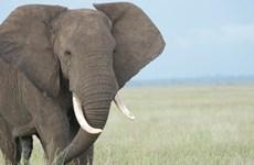 Nghiên cứu vòi voi đem lại đột phá lớn cho ngành chế tạo người máy