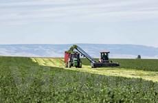 Bên trong nông trại hữu cơ làm nên thương hiệu sản phẩm Amway