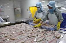 Đồng Tháp: Áp lực với người nuôi cá tra khi giá cá xuống thấp
