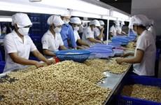 Hạt điều Việt Nam khẳng định vị trí cung cấp số 1 tại thị trường Nga