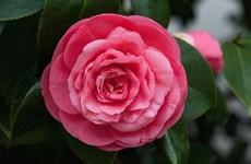 Bí ẩn loài hoa đẹp hiếm nhất thế giới chỉ mọc ở hai địa điểm
