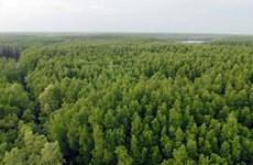 Rừng ngập mặn Cần Giờ - Điểm đến sinh thái đầy hấp dẫn